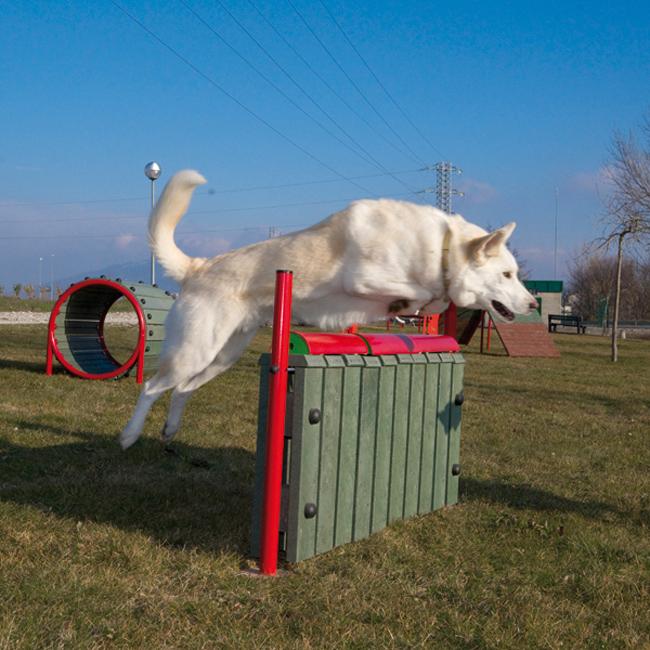URBAN SPORT DOGS