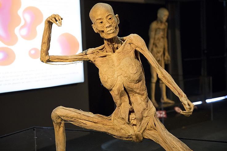 Human Bodies. Anatomía de la vida