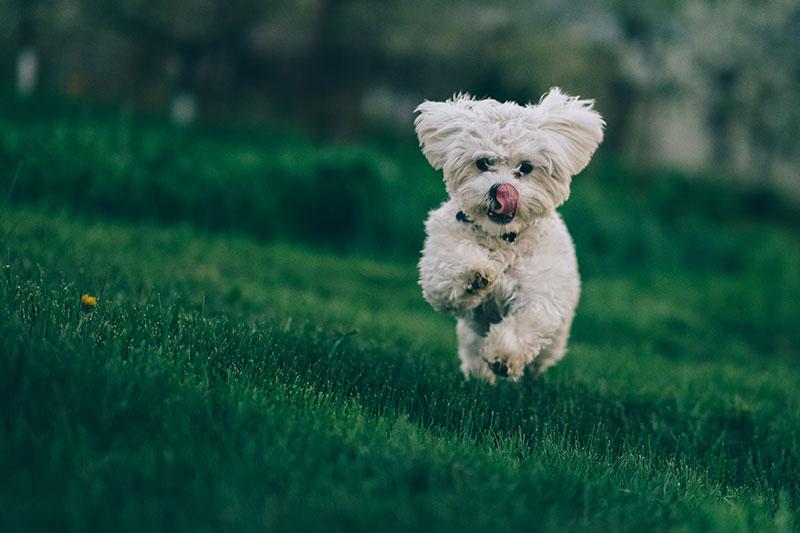 Día del Perro: Los 10 mejores regalos para celebrarlo