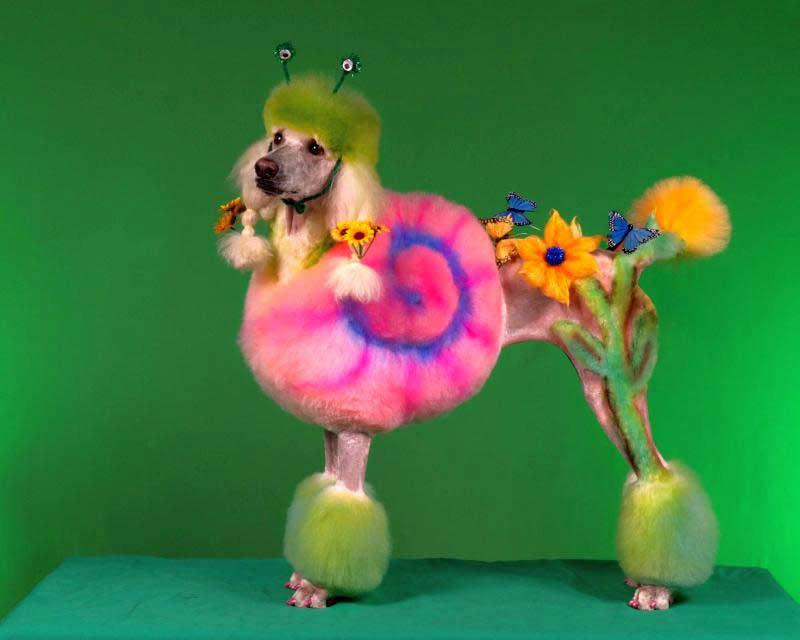 El nuevo talent show de peluquería canina