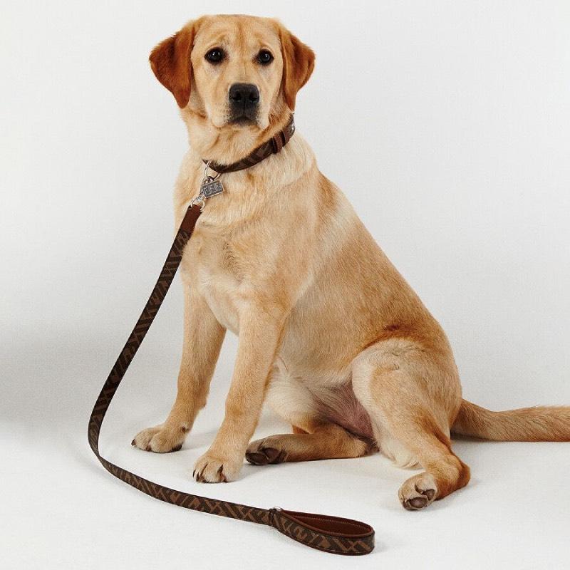 La línea de accesorios de lujo para perros de Fendi