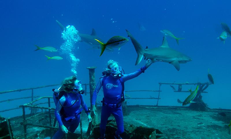 Las maravillas del mar inaugura el FICMA