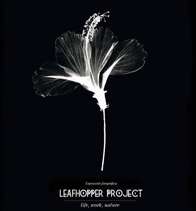 LEAFHOPPER PROJECT